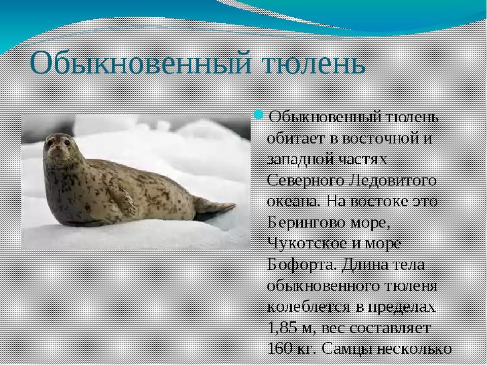 Обыкновенный тюлень Обыкновенный тюлень обитает в восточной и западной частях...