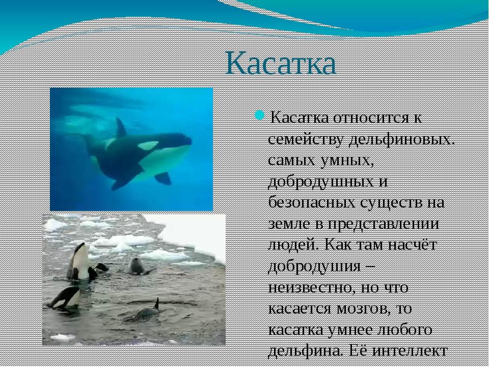 Касатка Касатка относится к семейству дельфиновых. самых умных, добродушных...