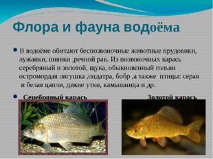 Флора и фауна водоёма В водоёме обитают беспозвоночные животные прудовики, лу