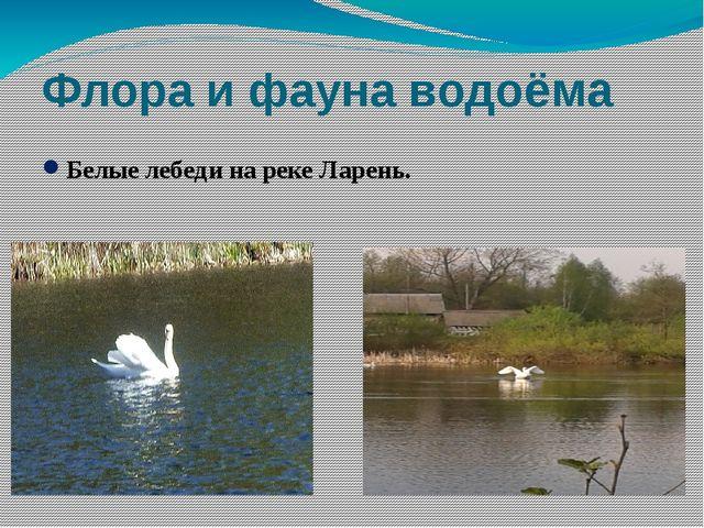 Флора и фауна водоёма Белые лебеди на реке Ларень.