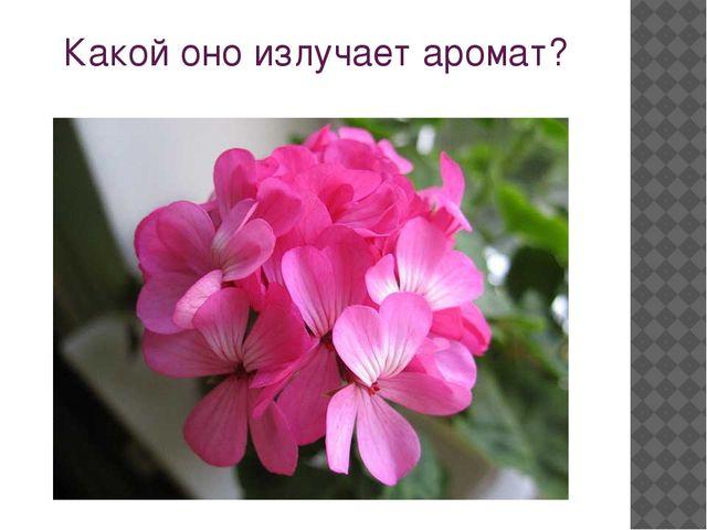 Какой оно излучает аромат?