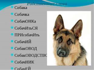 Родственные слова Собака Собачка СобачОНКа СобачИтьСЯ ПРИсобачИть СобачИЙ Соб