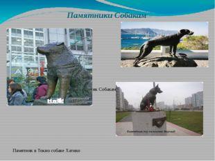 Памятники Собакам Памятник Собакам-поводырям Памятник в Токио собаке Ха