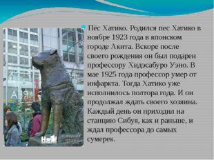 Пёс Хатико. Родился пес Хатико в ноябре 1923 года в японском городе Акита. В