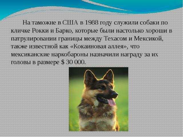 На таможне в США в 1988 году служили собаки по кличке Рокки и Барко, которые...