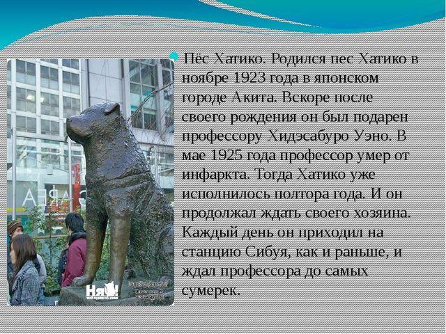 Пёс Хатико. Родился пес Хатико в ноябре 1923 года в японском городе Акита. В...