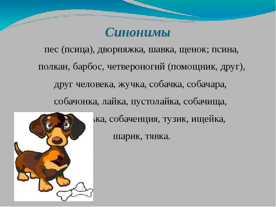 Синонимы пес (псица), дворняжка, шавка, щенок; псина, полкан, барбос, четверо...