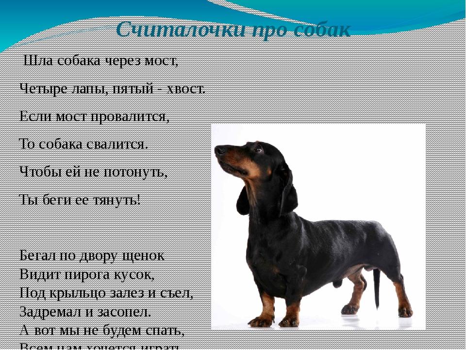 Считалочки про собак Шла собака через мост, Четыре лапы, пятый - хвост. Если...