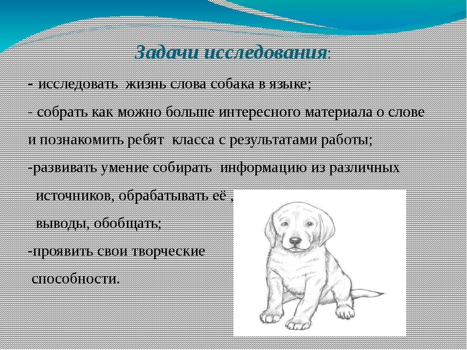Задачи исследования: - исследовать жизнь слова собака в языке; - собрать как...