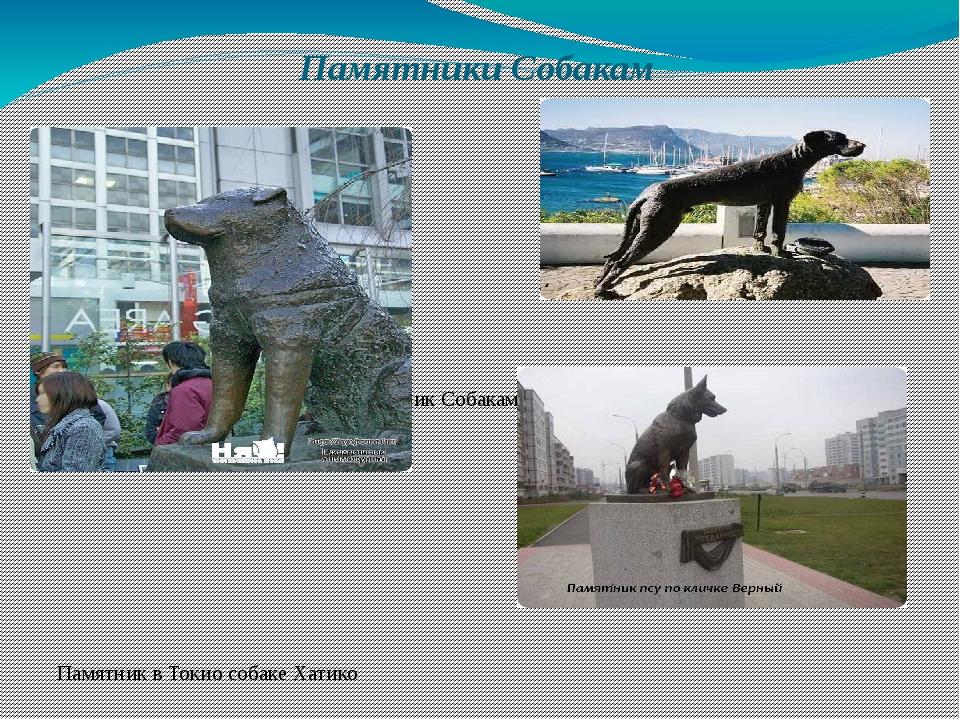 Памятники Собакам Памятник Собакам-поводырям Памятник в Токио собаке Ха...
