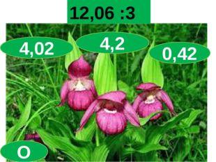 Мир орхидей