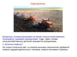 Агроценозы Биоценозы, которые возникают на землях сельскохозяйственного польз