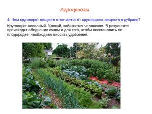 Агроценозы 4. Чем круговорот веществ отличается от круговорота веществ в дубр