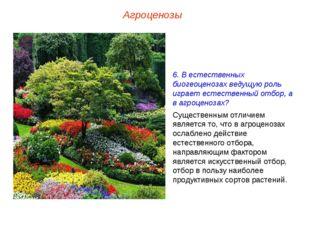 Агроценозы 6. В естественных биогеоценозах ведущую роль играет естественный о