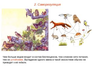 2. Саморегуляция Чем больше видов входит в состав биогеоценоза, тем сложнее с