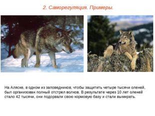 2. Саморегуляция. Примеры. На Аляске, в одном из заповедников, чтобы защитить