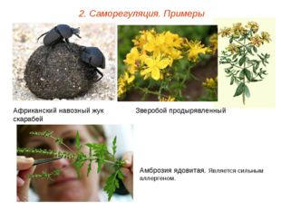 2. Саморегуляция. Примеры Африканский навозный жук скарабей Зверобой продыряв