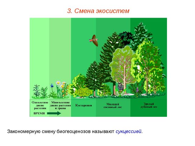 3. Смена экосистем Закономерную смену биогеоценозов называют сукцессией.
