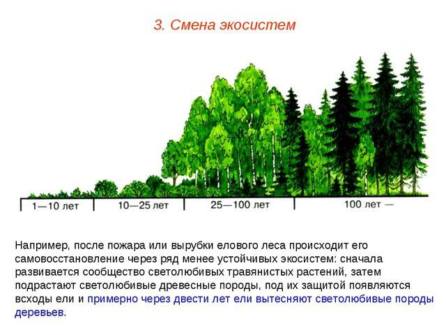 3. Смена экосистем Например, после пожара или вырубки елового леса происходит...