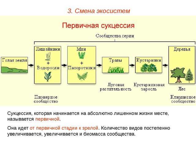 3. Смена экосистем Сукцессия, которая начинается на абсолютно лишенном жизни...