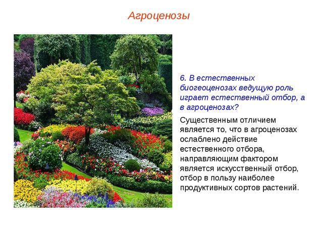 Агроценозы 6. В естественных биогеоценозах ведущую роль играет естественный о...