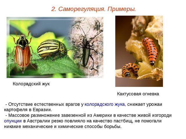 2. Саморегуляция. Примеры. - Отсутствие естественных врагов у колорадского жу...