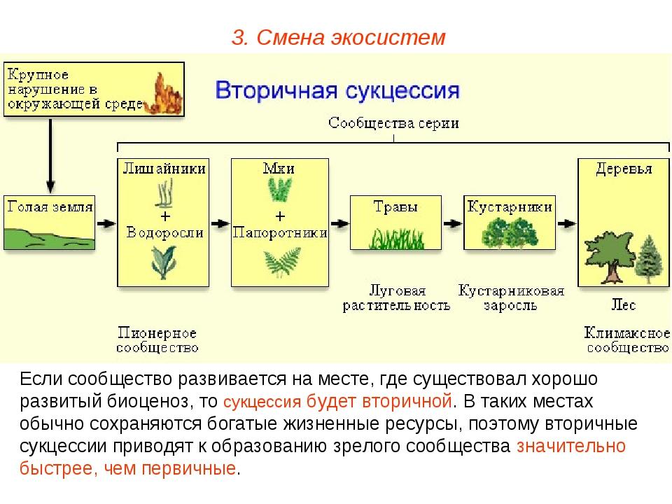 3. Смена экосистем Если сообщество развивается на месте, где существовал хоро...