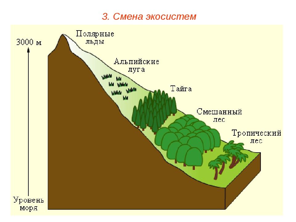3. Смена экосистем