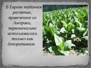 В Европе табачное растение, привезенное из Америки, первоначально использова