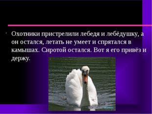 Охотники пристрелили лебедя и лебёдушку, а он остался, летать не умеет и спр