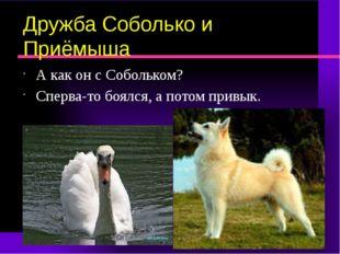 Дружба Соболько и Приёмыша А как он с Собольком? Сперва-то боялся, а потом пр