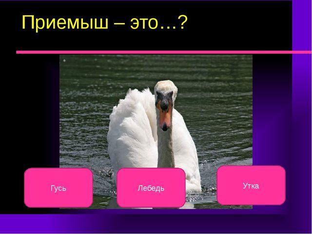 Приемыш – это…? Лебедь Гусь Утка