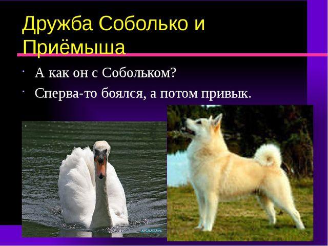 Дружба Соболько и Приёмыша А как он с Собольком? Сперва-то боялся, а потом пр...