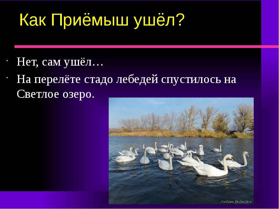 Как Приёмыш ушёл? Нет, сам ушёл… На перелёте стадо лебедей спустилось на Свет...