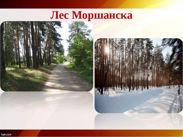 Лес Моршанска