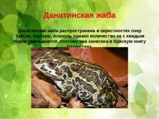 . Данатинская жаба Данатинская жаба распространена в окрестностях озер Зайсан