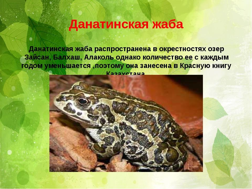 . Данатинская жаба Данатинская жаба распространена в окрестностях озер Зайсан...
