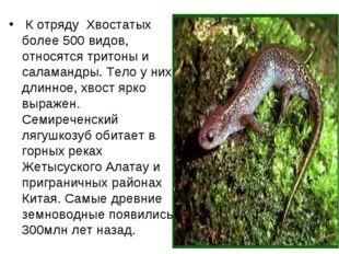К отряду Хвостатых более 500 видов, относятся тритоны и саламандры. Тело у н