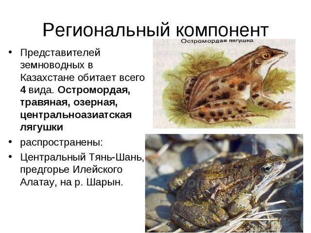 Региональный компонент Представителей земноводных в Казахстане обитает всего...