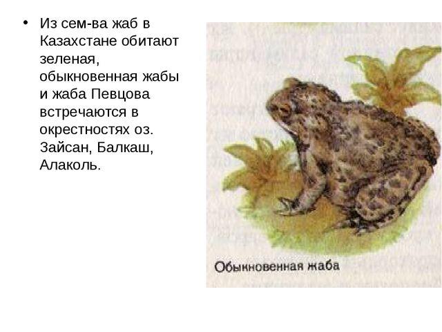 Из сем-ва жаб в Казахстане обитают зеленая, обыкновенная жабы и жаба Певцова...