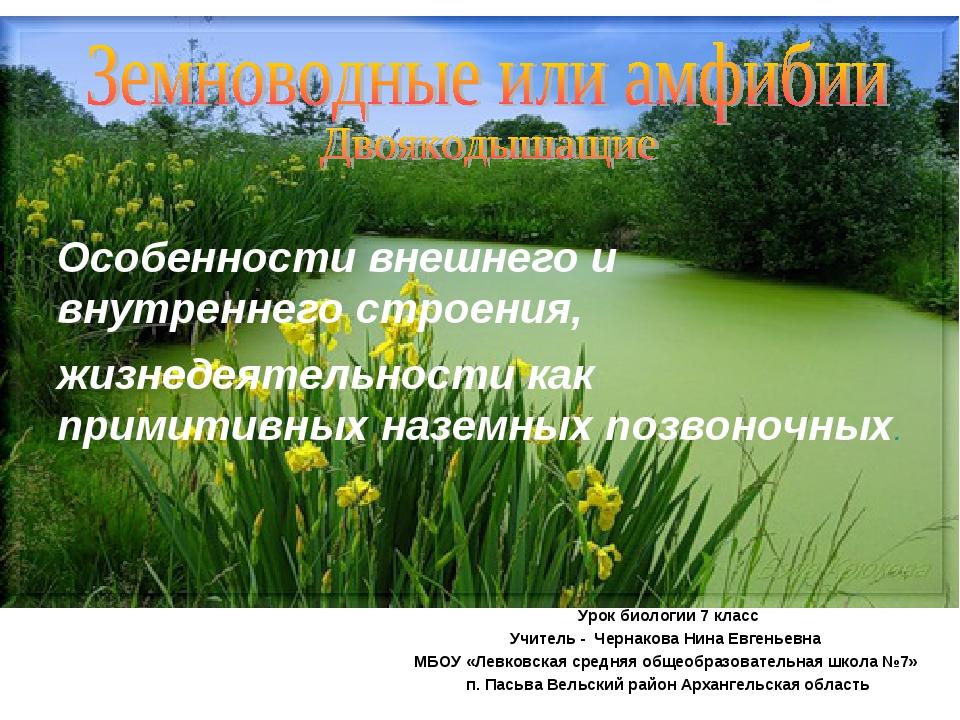 Особенности внешнего и внутреннего строения, жизнедеятельности как примитивны...