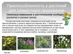 Сезонные изменения в растительном сообществе (развитие в разные сроки) Приспо