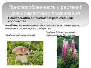 Сожительство организмов в растительном сообществе Приспособленность у растени