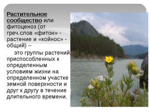 Растительное сообщество или фитоценоз (от греч.слов «фитон» - растение и «кой