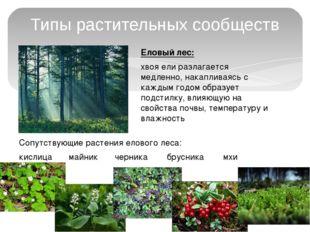 Типы растительных сообществ Еловый лес: хвоя ели разлагается медленно, накапл
