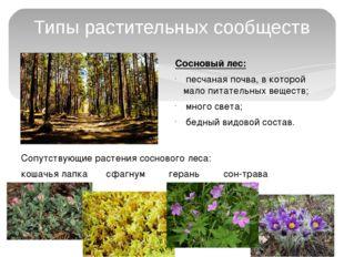 Типы растительных сообществ Сосновый лес: песчаная почва, в которой мало пита
