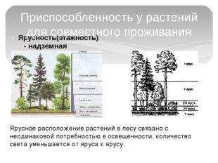 Ярусность(этажность) - надземная Приспособленность у растений для совместного