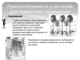 - подземная Приспособленность у растений для совместного проживания Глубже п