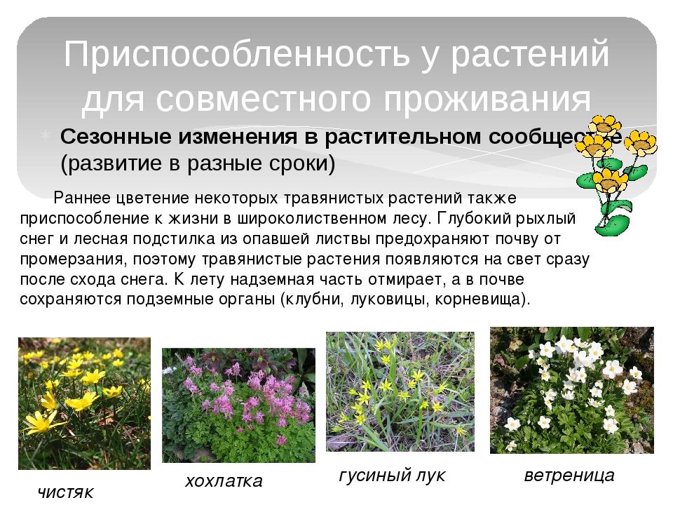 Сезонные изменения в растительном сообществе (развитие в разные сроки) Приспо...