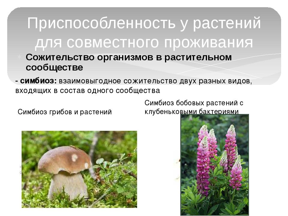 Сожительство организмов в растительном сообществе Приспособленность у растени...
